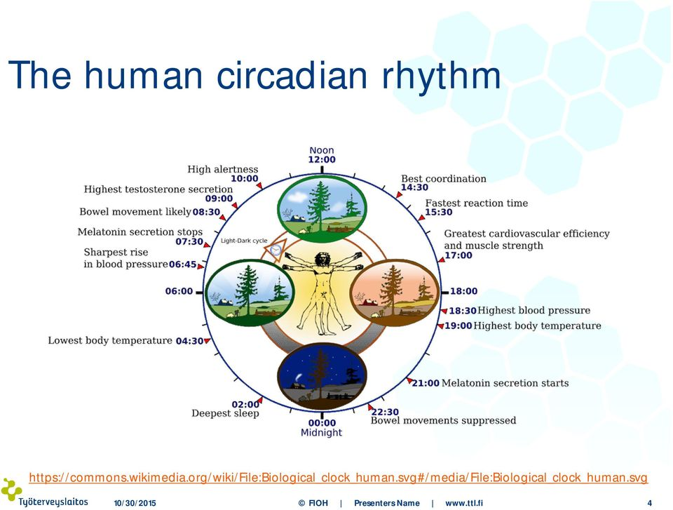 org/wiki/file:biological_clock_human.