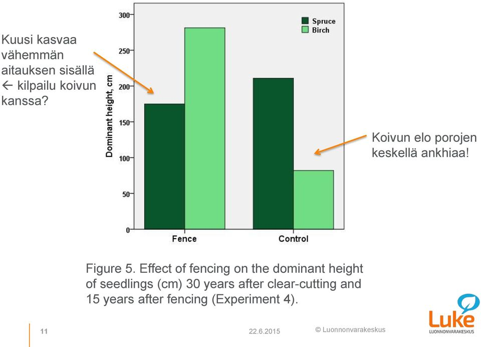 Effect of fencing on the dominant height of seedlings (cm) 30