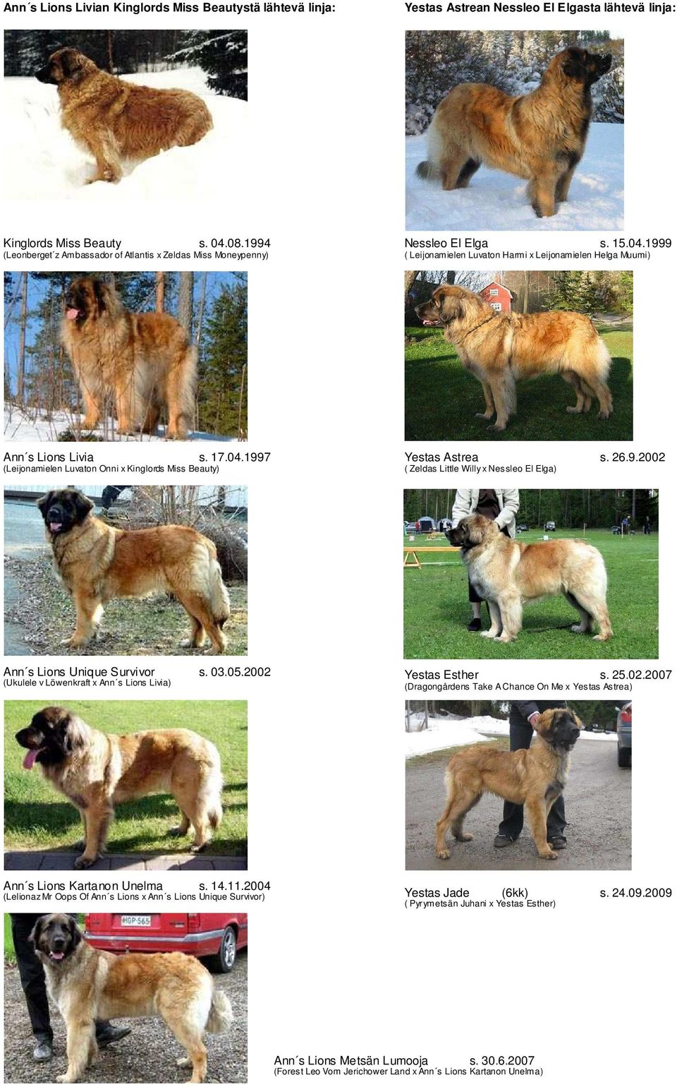 26.9.2002 ( Zeldas Little Willy x Nessleo El Elga) Ann s Lions Unique Survivor s. 03.05.2002 (Ukulele v Löwenkraft x Ann s Lions Livia) Yestas Esther s. 25.02.2007 (Dragongårdens Take A Chance On Me x Yestas Astrea) Ann s Lions Kartanon Unelma s.
