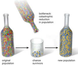 Population isolate Opportunity to identify disease associated low frequency variants Finns have