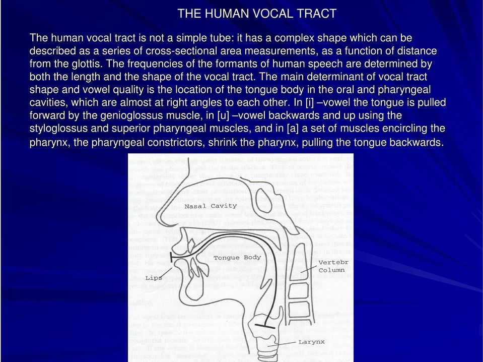 The main determinant of vocal tract shape and vowel quality is the location of the tongue body in the e oral and pharyngeal cavities, which are almost at right angles to each other.