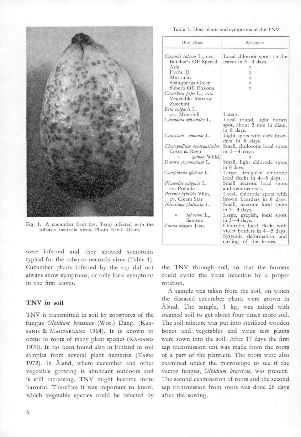 TNV in soi! TNV is transmitted in soil by zoospores of the fungus Olpidium brassicae (Wor.) Dang. (ICAs- SANIS & MACFARLANE 1964). It is known to occur in roots of many plant species (KAssANis 1970).
