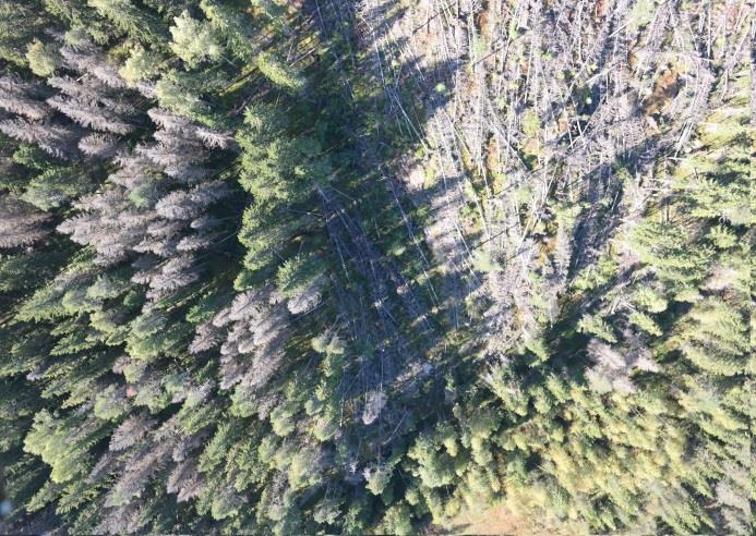 Hyperspectral UAV for vegetation health monitoring Serious tree death in spruce forests due to bark beetle in Southern Finland Objective: Early detection of infestion using hyperspectral images and